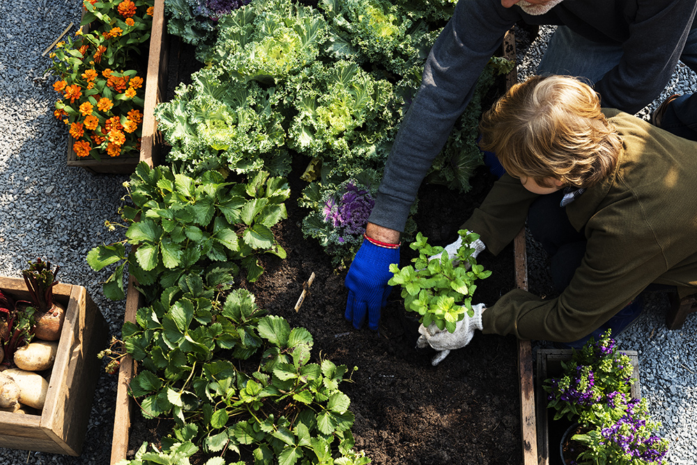 The Benefits and How to Create a Vegie Garden