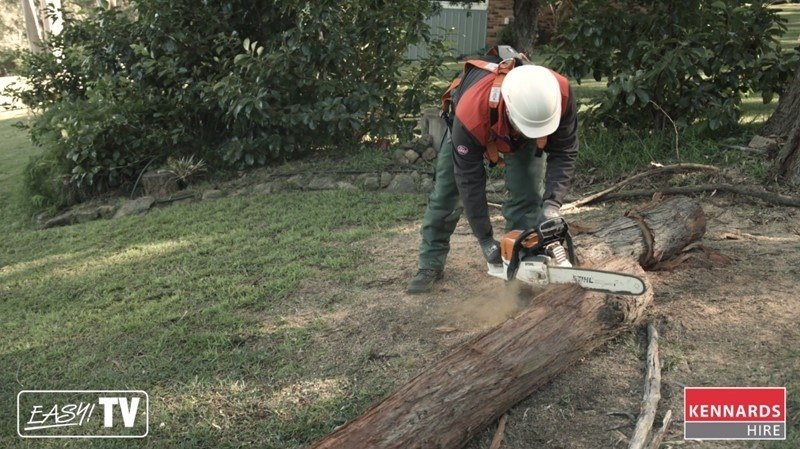 Cut the trunk into square pieces with the large chainsaw.