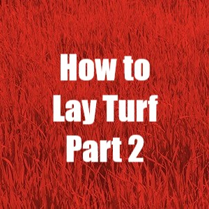 How to lay turf part 2